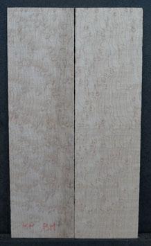 Kopfplattenpaar Vogelaugenahorn