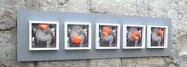 """3D BOX - 5 Fragments """" le penseur métamorphose """""""