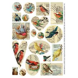 Collage Bilder Vogel  Nunn Design