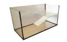 Schildkrötenbecken aus Glas