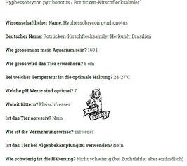 Hyphessobrycon pyrrhonotus / Rotrücken-Kirschflecksalmler