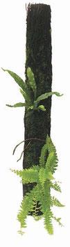 XAXIM Baumfarnstamm ca. Ø5-8cm, 50cm