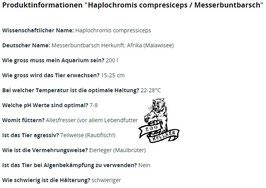 Haplochromis compresiceps / Messerbuntbarsch