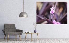 Pink African Flower