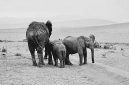 Elefanten s/w