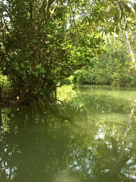 Backwaters 1