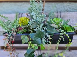 Regenrinne mit Succulenten klein