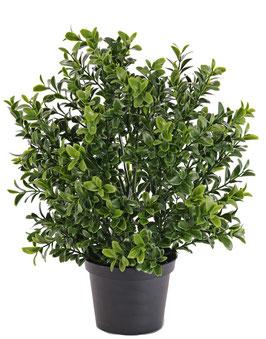 Buchsbüschchen UV-Schutz