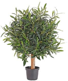 Olivenkugel auf Stamm UV-Schutz