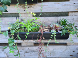 Regenrinne mit Succulenten groß