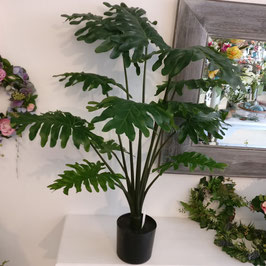 Philodendron Pflanze