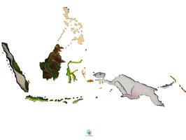 "Licence d'utilisation de l'image ""Indonésie Philippines"" SIDHERIA"