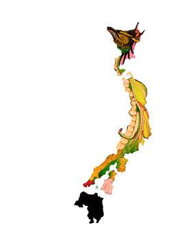"Licence d'utilisation de l'image ""Japon Origine"" SIDHERIA"
