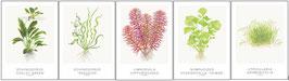 Tropica 522 Art Cards 13x18cm (incl Echinodorus)