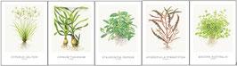 Tropica 521 Art Cards 13x18cm (incl Cyperus)