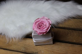 Flowerbox Carré 1 Rose