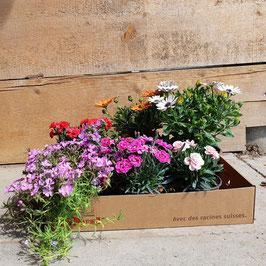 Gärtner Kistli Blühend