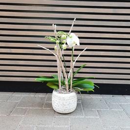 Weisse Orchidee ausgarniert