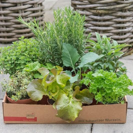 Gärtner Kistli Kräuter & Gemüse
