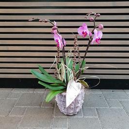 Pinke Orchidee ausgarniert
