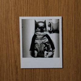 Artikel-Nr. 031C - Polaroidmagnet Motiv Katze