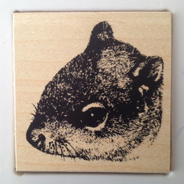 Artikel-Nr. 036R  - Stempel Wildlife Hörnchen
