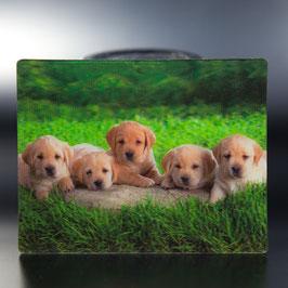 Artikel-Nr. 017D - Kühlschrankmagnet Motiv Hundewelpen