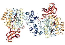 Prokaryotic pyrimidine nucleoside phosphorylase 2