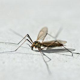 AROMELL - Anti Insekt