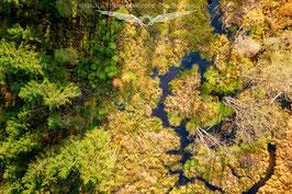 Herbst im Bayerwald 4