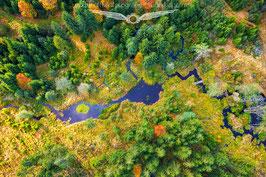 Herbst im Bayerwald 3