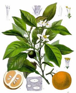 Extracto de Flores de Azahar