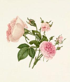 Extracto de Rosas