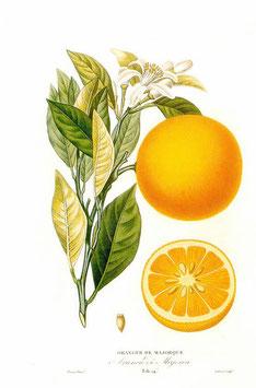 Extracto de Naranja