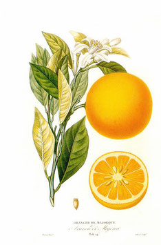 Extracto de Naranjas clementine WONF (With other natural flavors)