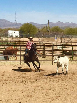Horsemanship Mentoring