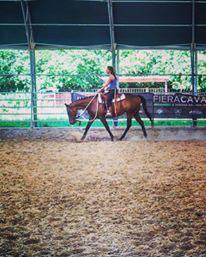 Horsemanship Course