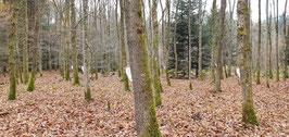 Forest Men