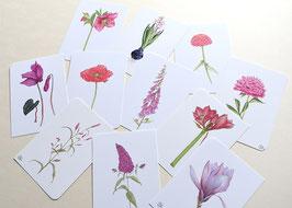 Postkarten Blüten rosa-rot