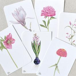 Postkarten rosa-pink