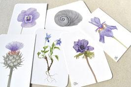 Postkarten Set-Violett