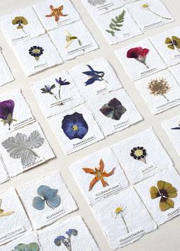 4er Set Herbarium mini-Bilder