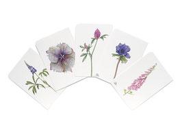 Postkarten rosa-flieder-lila