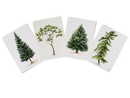 Postkarten Nadelbäume