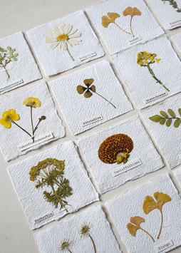 Herbarium mini-Bild gelb-orange