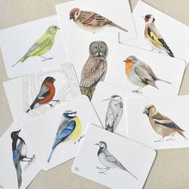 Postkarten Vogelschar