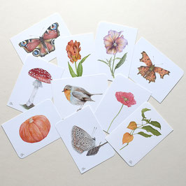 Postkarten-Set Rotkehlchen Fliegenpilz Klatschmohn...