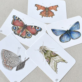 Postkarten Schmetter-linge