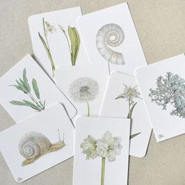 Postkarten Set creme-beige-grau
