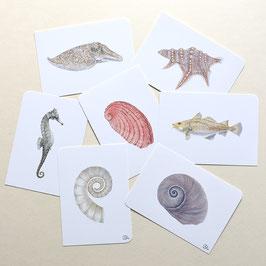 Postkarten See-pferdchen Tintenfisch...